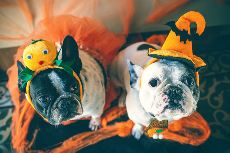 Dogs in Disguise for Halloween