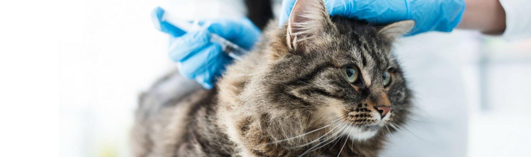 Service-cat-vaccines