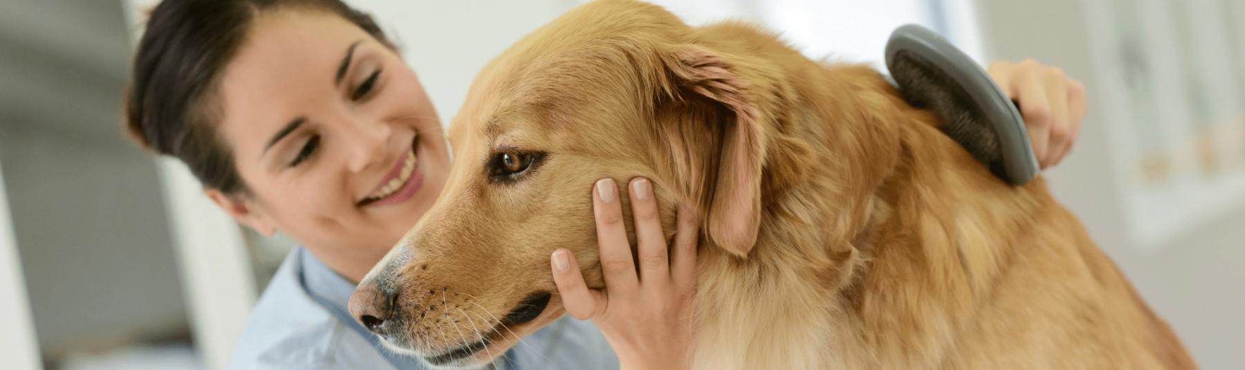 Veterinarian brushing a dog