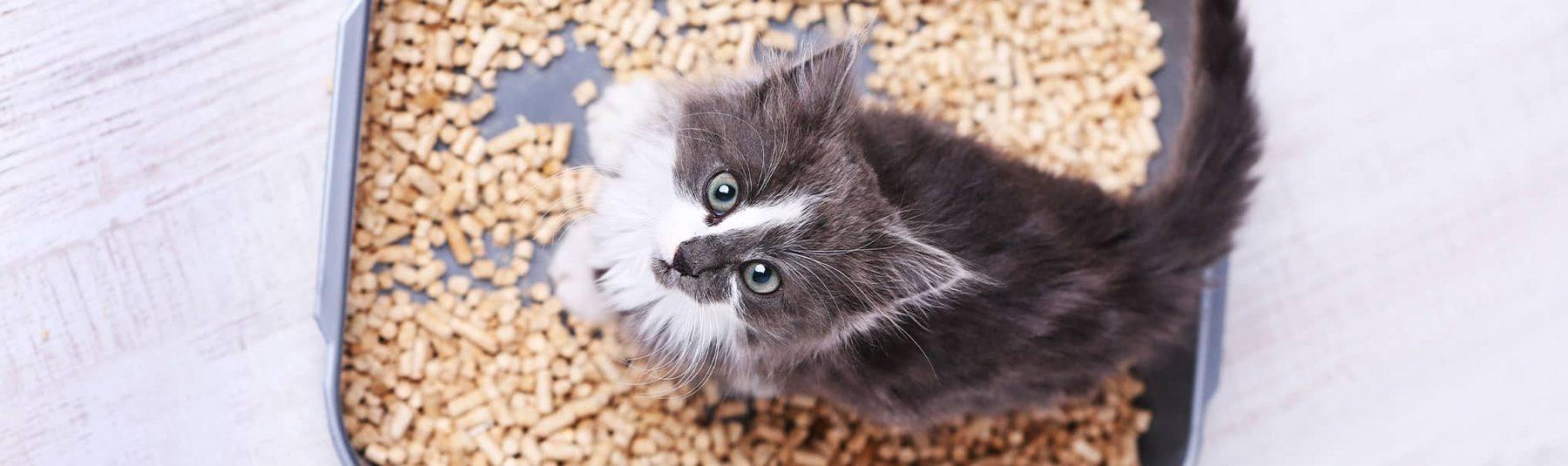 cat_fecal