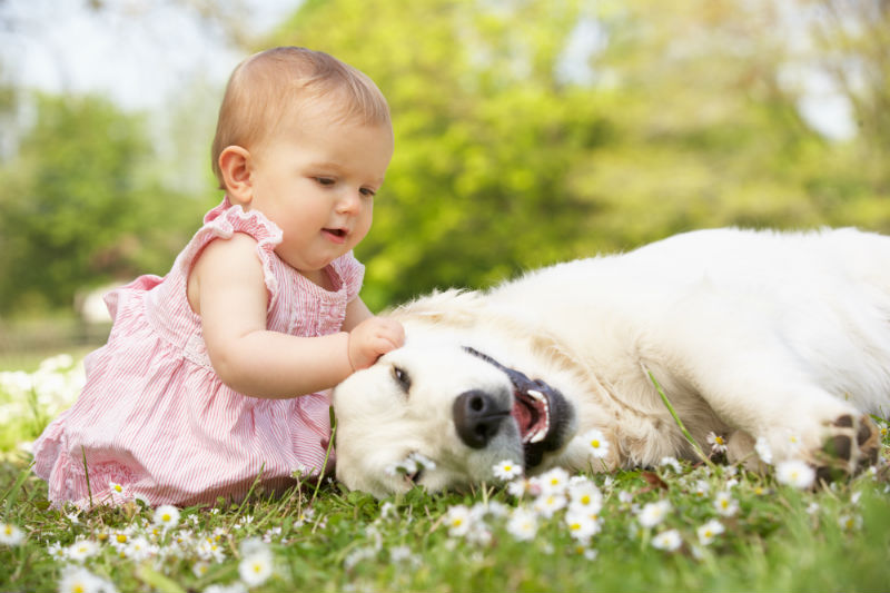 dog baby