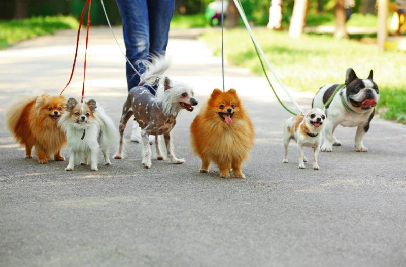 Dog Socializing