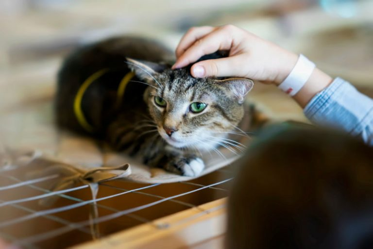 A cat lying down on a cage and being pet by a person