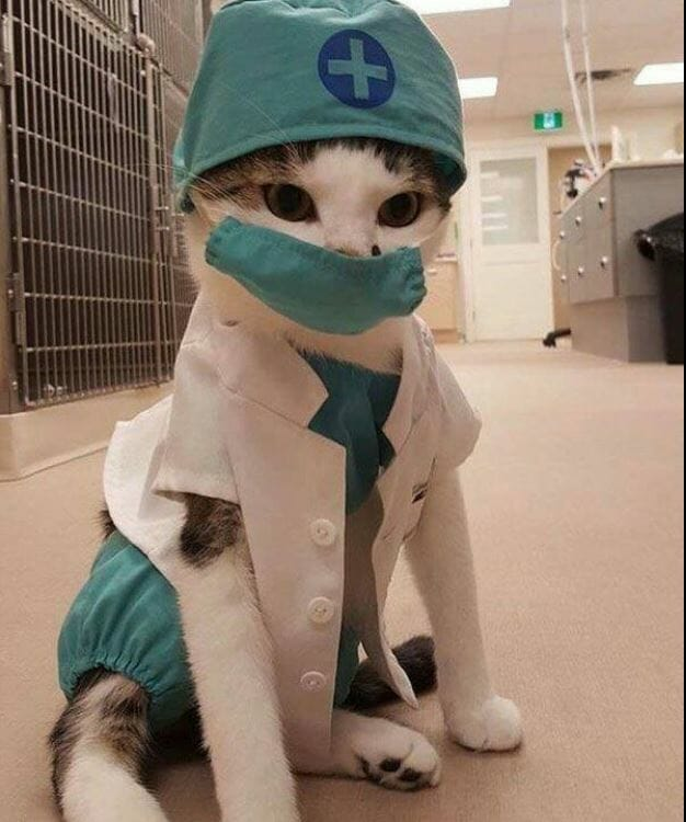 Cat wearing doctor clothing