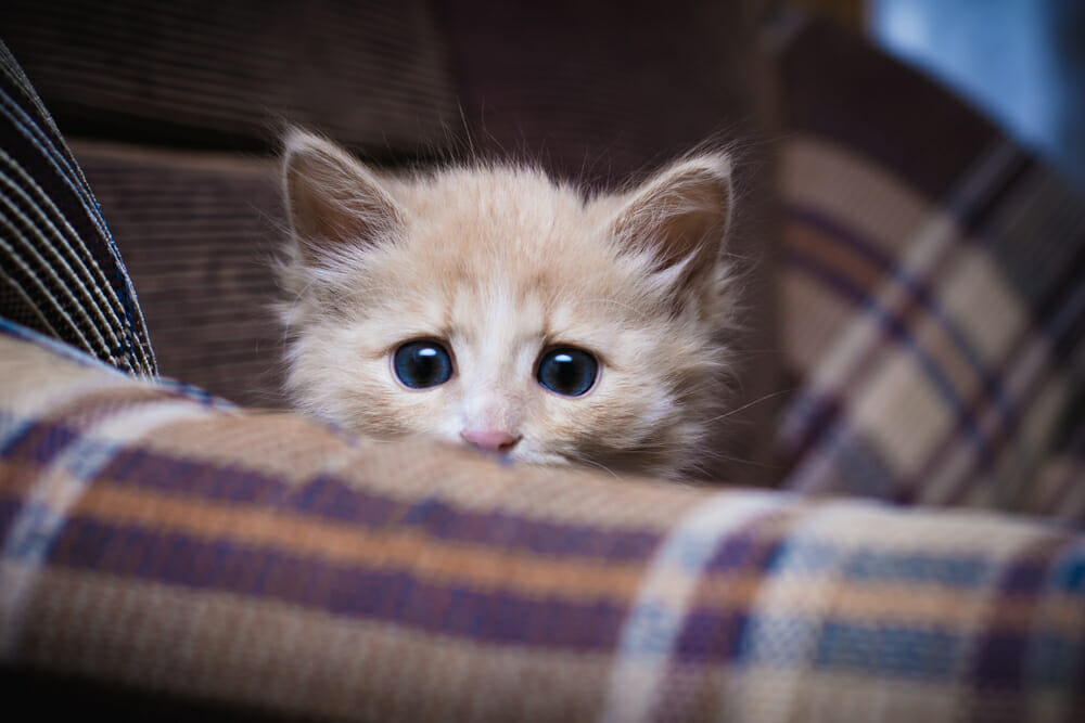 Scared kitten on a couch